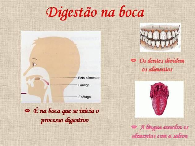 Gengivite - Digestão